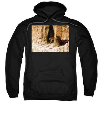 Sweatshirt featuring the photograph Mountain Lion In The Desert by Judy Kennedy