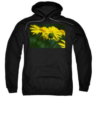 Yellow Daisy Bud Sweatshirt
