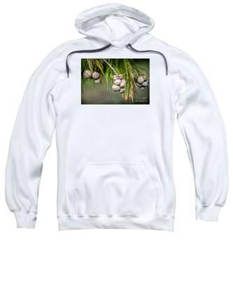Bald Cypress Tree Seed Pods Sweatshirt