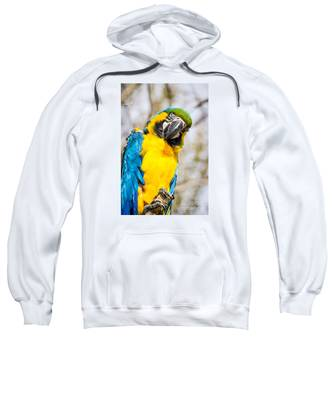 Blue And Gold Macaw Parrot Sweatshirt