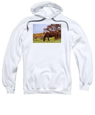 Fall And A Horse Sweatshirt