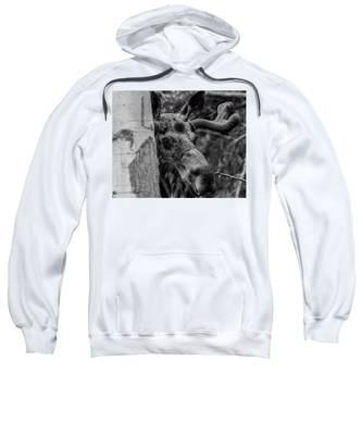 Peek-a-moose Sweatshirt