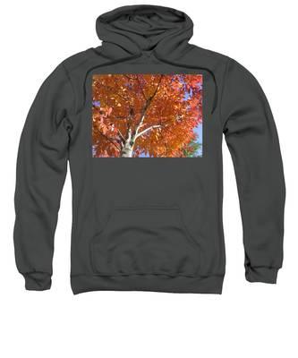 Autumn Aspen Sweatshirt