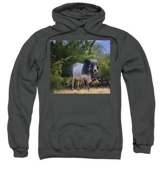 Brahma Cow Sweatshirt