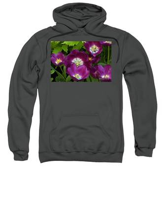 Triumph Tulips Negrita Variety Sweatshirt