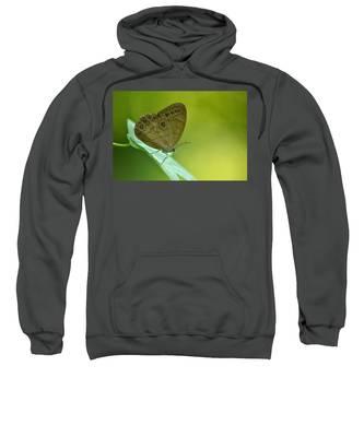 Appalachian Brown Sweatshirt