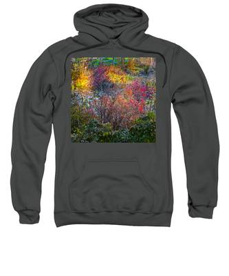 Bright Autumn Light Sweatshirt
