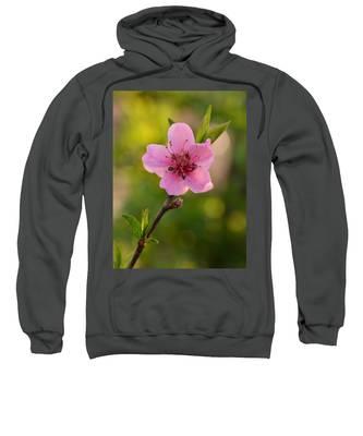 Pretty Pink Peach Sweatshirt