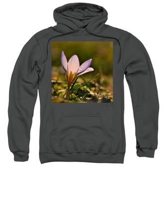 Purple Crocus Sweatshirt