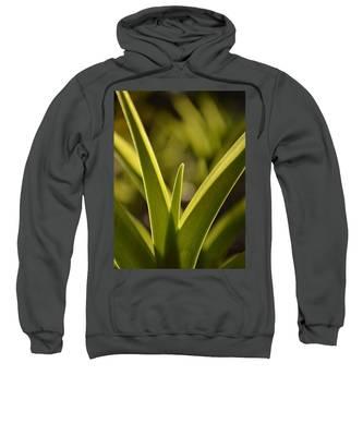 Variegated Light 1 Sweatshirt
