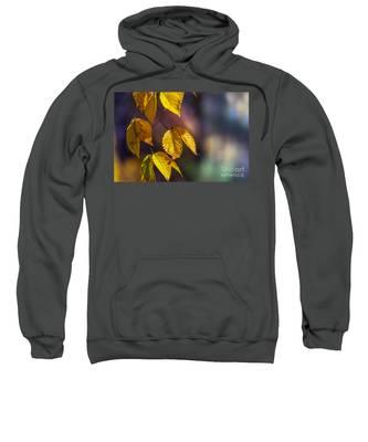 Autumn Sonata Sweatshirt