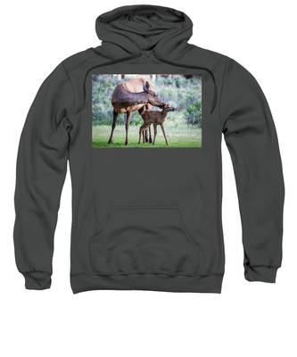 Cow And Calf Elk Sweatshirt