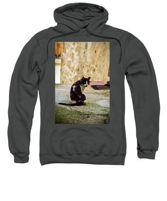 Lone Cat Sweatshirt