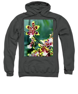 Striped Maroon And Yellow Orchid Sweatshirt