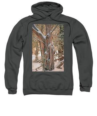 Snowy Dead Tree Sweatshirt