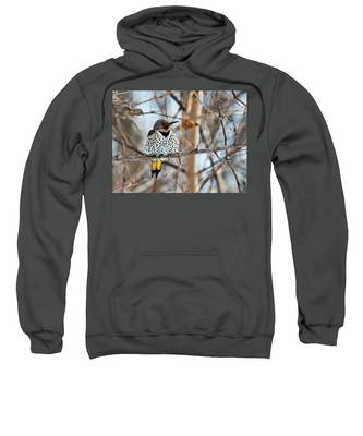 Yellow-shafted Northern Flicker Staying Warm Sweatshirt