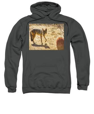 Sweatshirt featuring the photograph Young Coyote And Cactus by Judy Kennedy