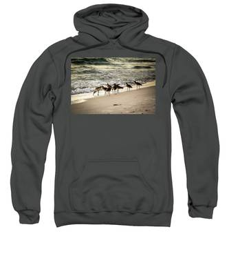 Birds On The Beach Sweatshirt