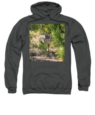Sweatshirt featuring the photograph Cautious Coyote by Judy Kennedy
