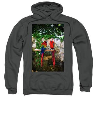 Colorful Parrots Sweatshirt