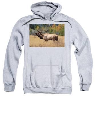 Bugling Bull Sweatshirt