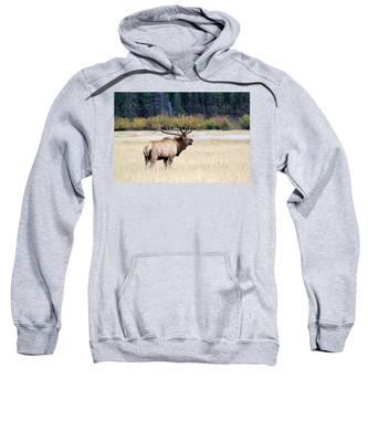 Big Colorado Bull Sweatshirt