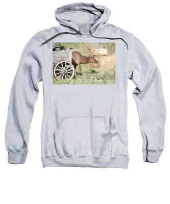 Elk Drawn Carriage Sweatshirt
