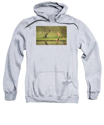 Morning Mood Sweatshirt