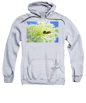 A Caterpillars Palace Sweatshirt