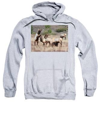 Boxing Match Sweatshirt