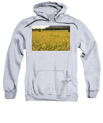 Field Of Yellow Daisy's Sweatshirt