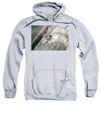 Little Jumper Sweatshirt