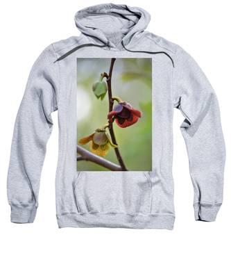 Paw-paw Flowers Sweatshirt