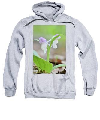 Showy Orchis Sweatshirt
