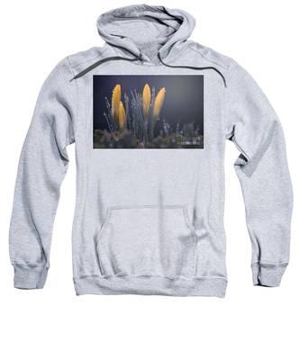 Promise Sweatshirt