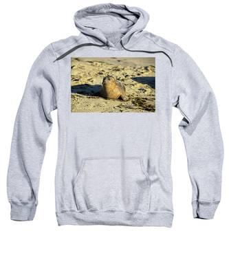 Baby Seal In Sand Sweatshirt