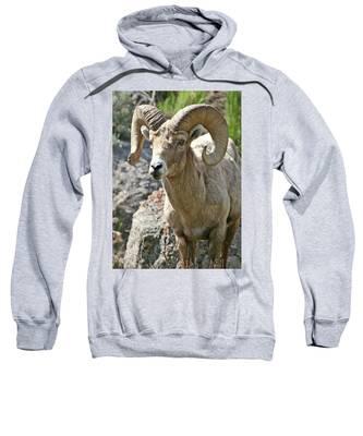 Bighorn Sheep Sweatshirt