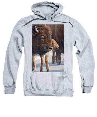 Bison Family Sweatshirt