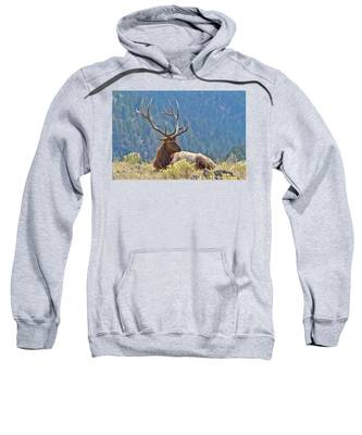 Bull Elk Resting Sweatshirt