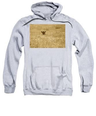 Buttercup In Sepia Sweatshirt