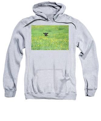 Buttercup Sweatshirt