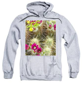 Sweatshirt featuring the photograph Cholla Cactus Blooms by Judy Kennedy