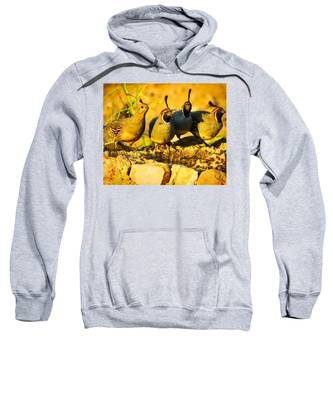 Sweatshirt featuring the photograph Gambel's Quail Foursome by Judy Kennedy