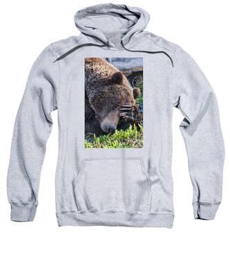 Lazy Bear Sweatshirt