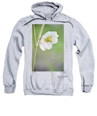 Mayapple Flower Sweatshirt