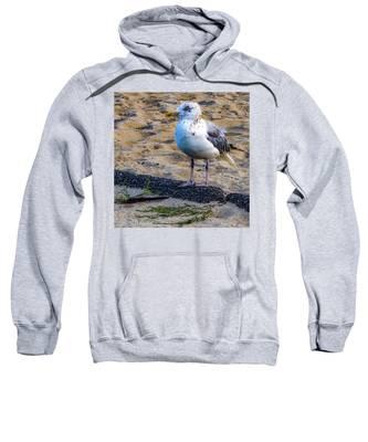 See The Gull Sweatshirt