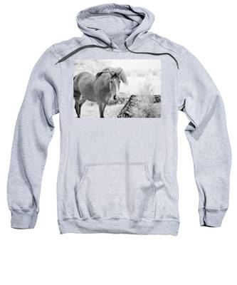 Horse In Infrared Sweatshirt
