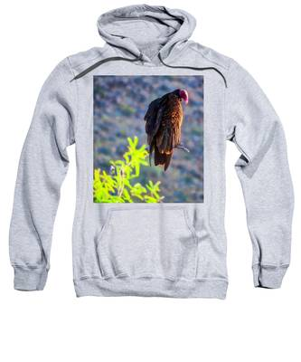 Sweatshirt featuring the photograph Turkey Vulture In The Sonoran Desert by Judy Kennedy