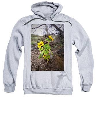 Sweatshirt featuring the photograph Wild Desert Sunflower by Judy Kennedy