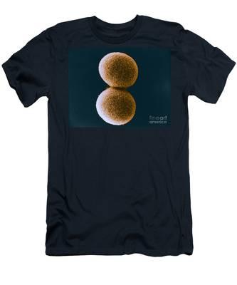 Shirt Zygote Fungi